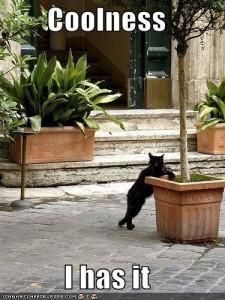 Obligatory Cat Picture